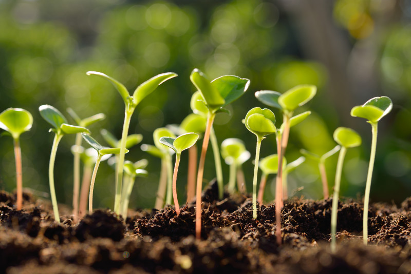 SGS BioVision Authorized for Phytosanitary Analysis