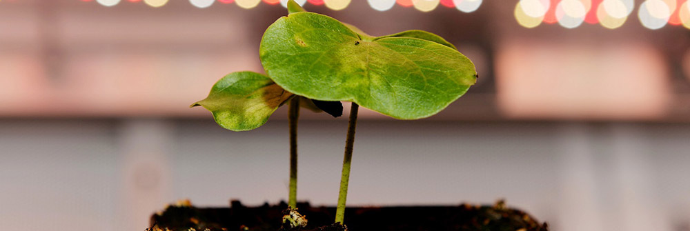 soil, leaf and water testing services canada